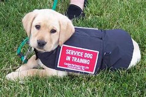 dogs to be service dogs service