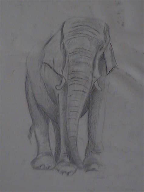 dibujar animales salvajes a lapiz imagui como dibujar animales salvajes a lapiz imagui