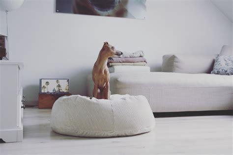 alleine zu hause hund allein daheim so entspannt geht s anzeige
