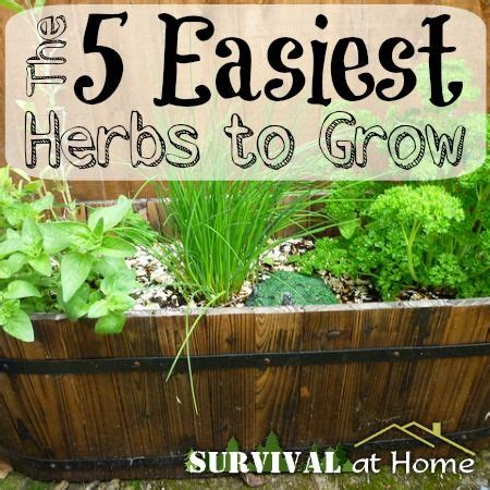 easy herbs to grow inside 27 best images about gardening on pinterest gardens