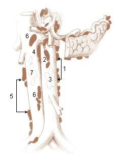 abdominal lymph nodes seer training