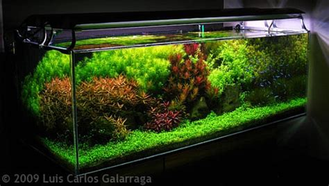 style aquascape dutch style aquascape design nature aquariums