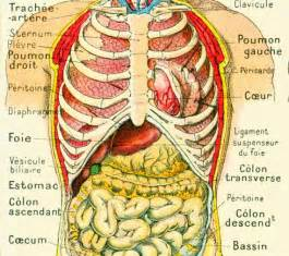 1912 humain anatomie torse visceres abdomen planche