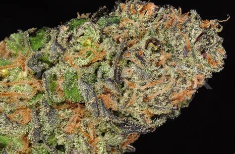 white facing weed strain review sour diesel weedist