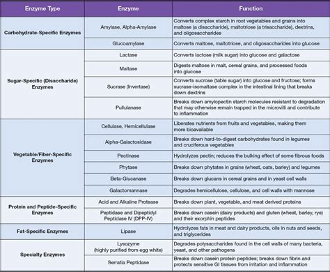 digestive enzymes digestive system enzymes chart newhairstylesformen2014