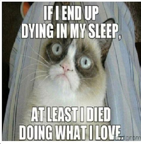 Grumpy Cat Sleep Meme - 865 best images about grumpy cat on pinterest gift