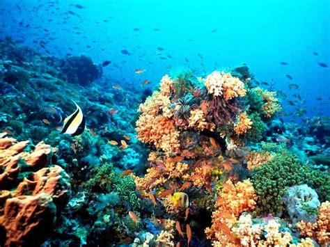 imagenes de paisajes guapos los mas hermosos fondo de pantalla de peces ideal para tu