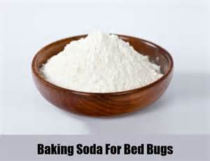 12 herbal remedies for bed bugs how to cure bed bugs