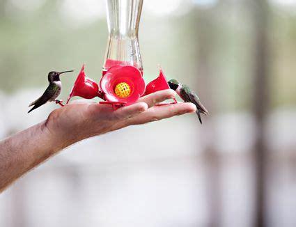 when to remove hummingbird feeders