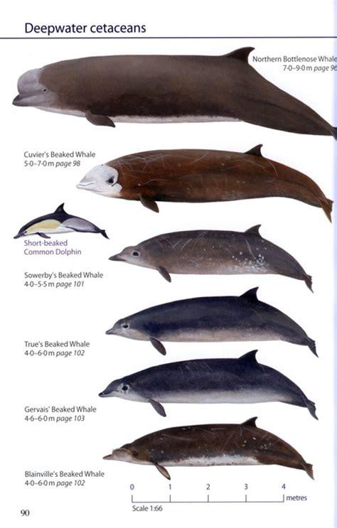 britain s sea mammals robert still jon dunn hugh harrop