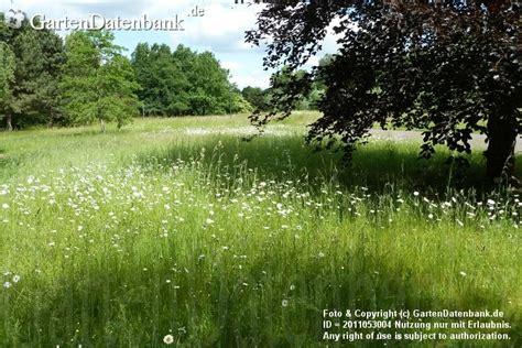Britzer Garten Juni by News Britzer Garten Im Sommer