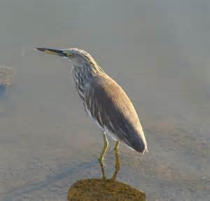 water bird india travel forum indiamike com