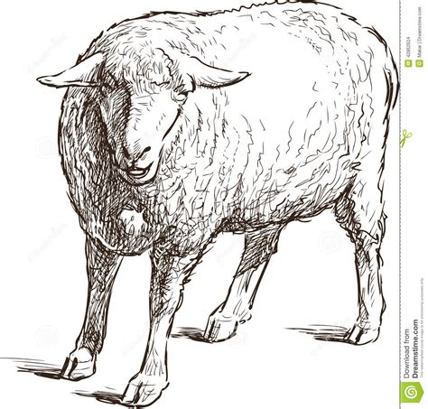 3d Sketch Programs sketch of a sheep stock photo image 42862624