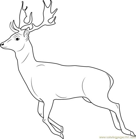 Running Deer Coloring Page | running deer coloring page printable coloring pictures