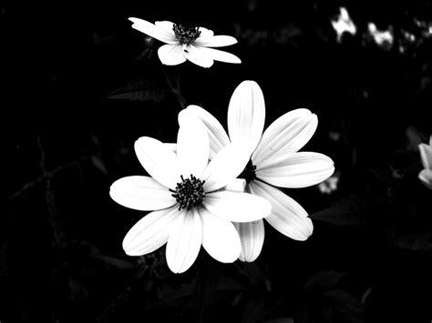 desktop wallpaper black and white flowers black and white flower backgrounds 10 desktop background