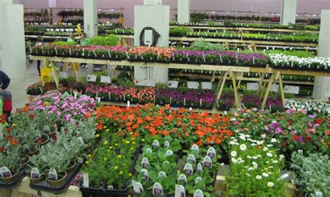 Garden Flowers For Sale Friends School Plant Sale State Fairgrounds May 8 10 Thrifty Minnesota