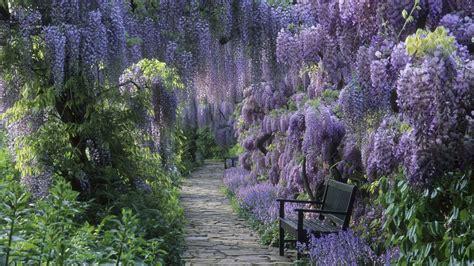 bench under flowering trees wallpaper 17046