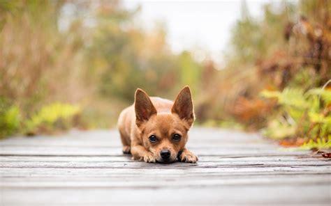 fotos animales wallpapers galer 237 a de im 225 genes fondos de perros