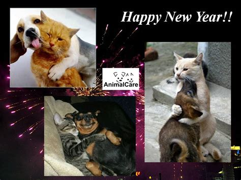 new year animals and what they happy new year 2013 171 animalcare
