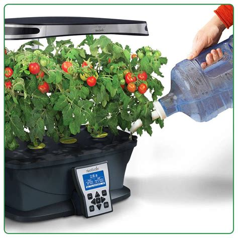 plants grow  waternot soil herb seeds herbs plants