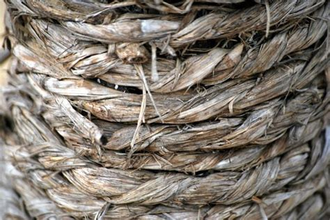 Why is everyone talking about hemp fiber read on to find out