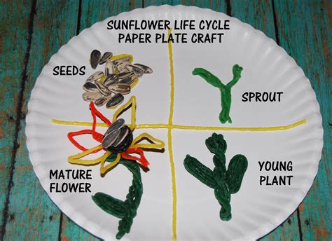How To Make A Paper Cycle - wikki stix sunflower cycle and crafts for
