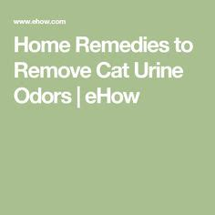 urine odor pet urine and pets on