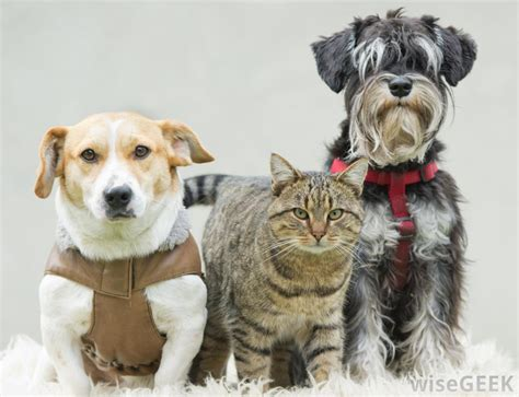 cats and dogs 2 what are some alternatives to commercial pet food for cats and dogs