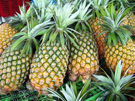 pineapple wallpaper pineapple wallpapers wallpaper cave