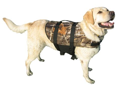 puppy jackets dogs pictures images photos