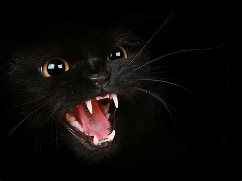wallpaper mac cat 1600x1200 black cat desktop pc and mac wallpaper