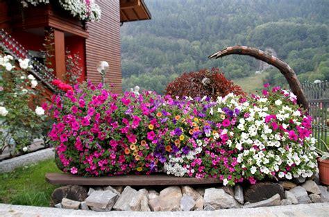 balconi fioriti in inverno tempo di balconi fioriti come non mai ad aprica notizie
