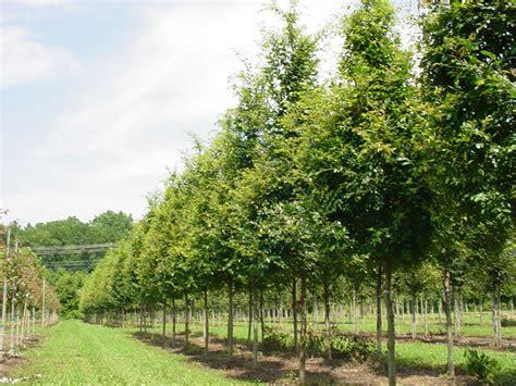 tree farms near nc tree farm nc 28 images greene tree farm boone nc