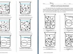 osmosis and diffusion worksheet by sidol s science store tpt