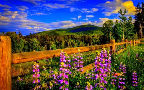 beautiful spring scenery wallpapers wallpapersafari spring scenery wallpaper for desktop wallpapersafari