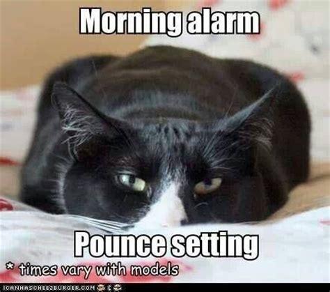 Baby Tuxedo Meme - tuxedo cat alarm clock sexy cat pinterest tuxedos