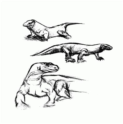 coloring pages of komodo dragon komodo dragon coloring pages coloring home