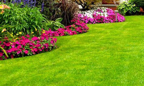 imagenes jardines de verano el tip 243 grafo 187 consejos para saber c 243 mo cuidar los
