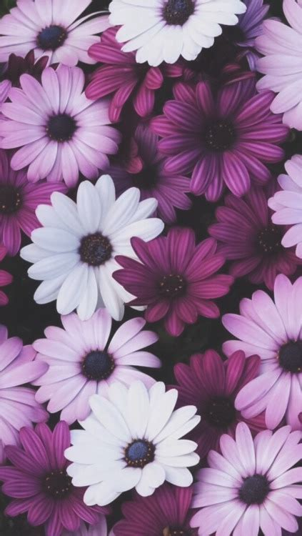 imagens tumblr flores floral iphone wallpaper tumblr