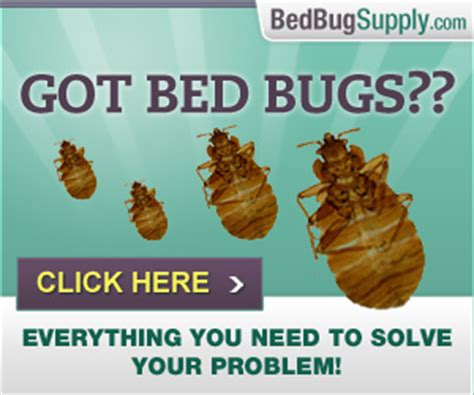 how do people get bed bugs book lice or bed bug nymphs how to tell the difference