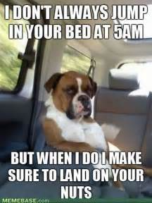 Funniest Meme In The World - 15 funniest dog memes ever just wait to see 8