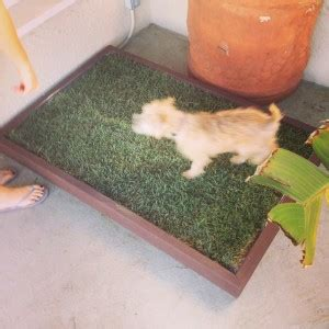 how to to use potty patch potty patch grass for your and the city