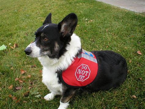 places that service dogs 6 dogs that are the world a better place rover