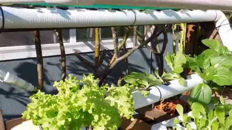 diy backyard hydroponic garden