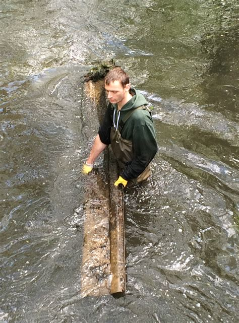 wandle metall wandle cleanup may 2015 merton the wandle trust