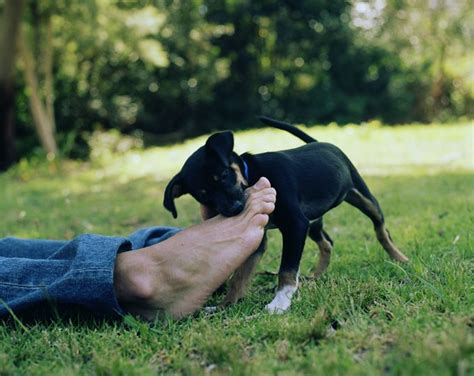 how to teach your puppy not to bite tips to raise a friendly today dogs