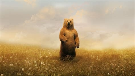 majestic bear backgrounds creativehobbystore