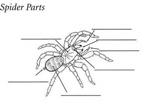 Exles Of Lesson Plan Templates by Spider Diagrams Templates