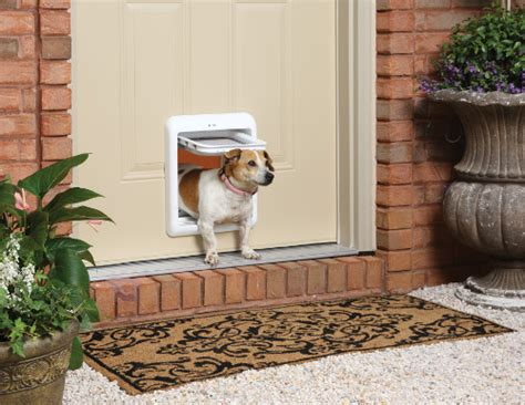 how to to use pet door dos and don ts of using a pet door