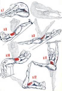exercices de musculation l espace musculation